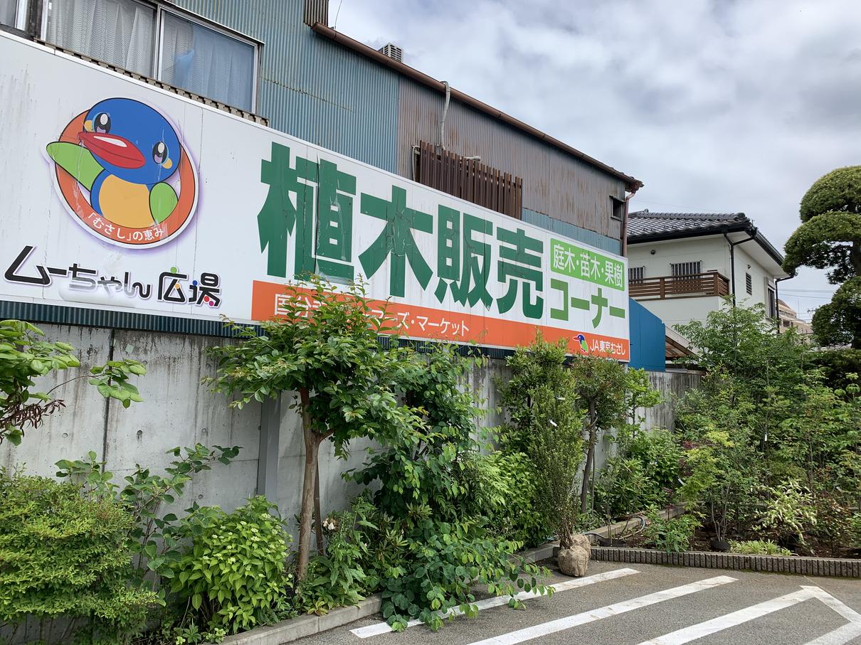ちゃん 広場 ムー