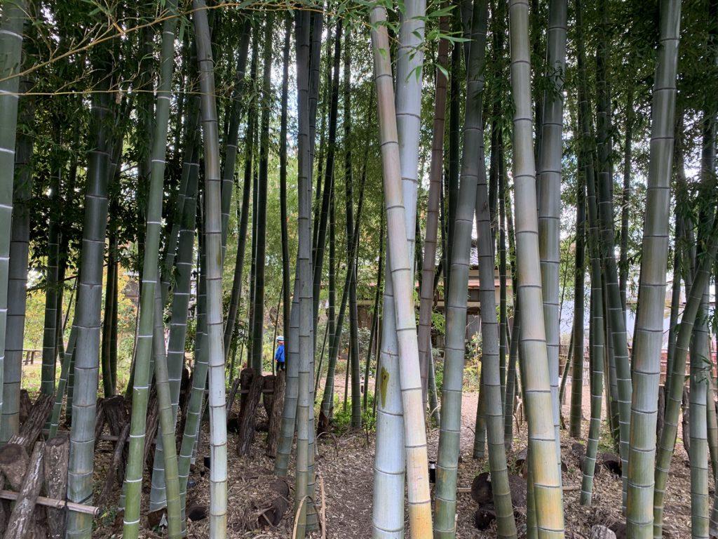 カフェおきもとの竹林