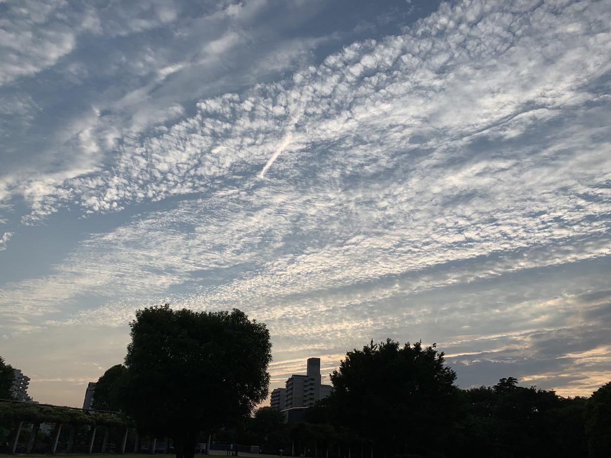 武蔵国分寺公園の円形広場で見る雲 (6月21日 18時30分頃撮影)