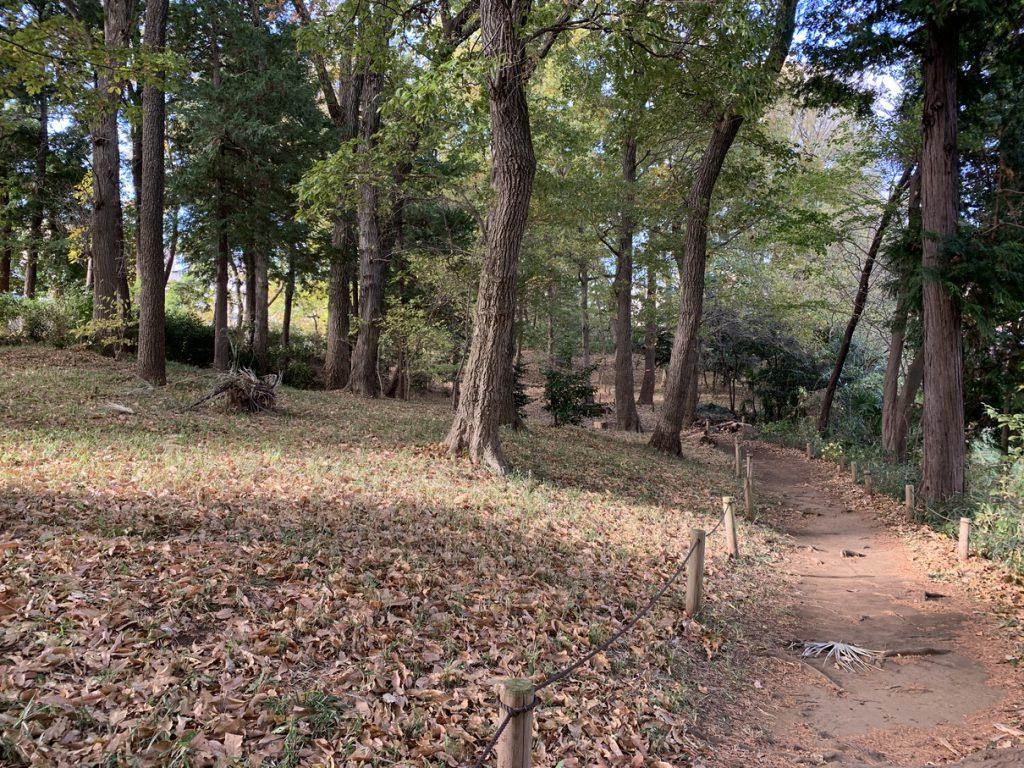 日影山の雑木林を散策したり