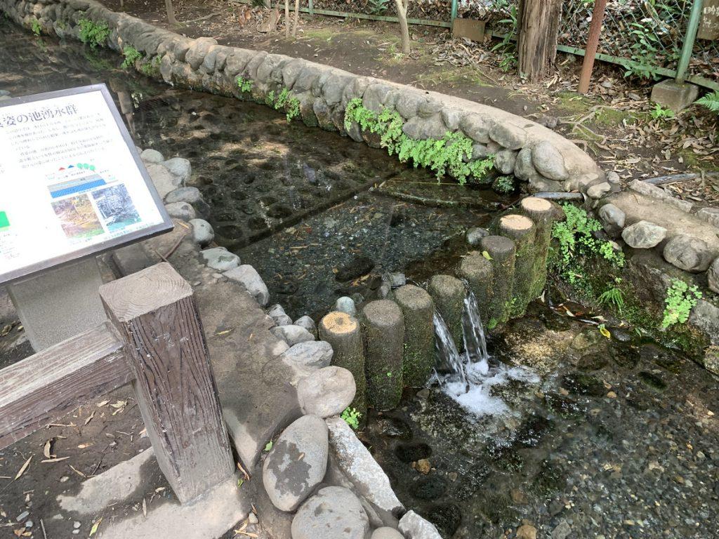 真姿の池湧水群の湧き水