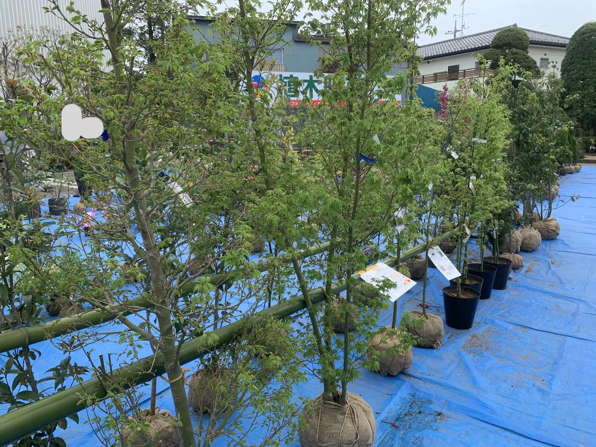 JA東京むさし ムーちゃん広場での国分寺市植木フェア