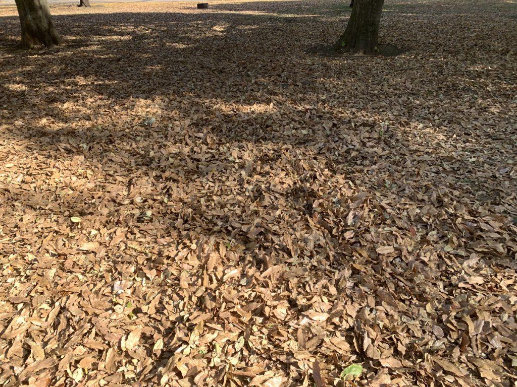 武蔵国分寺公園の落ち葉