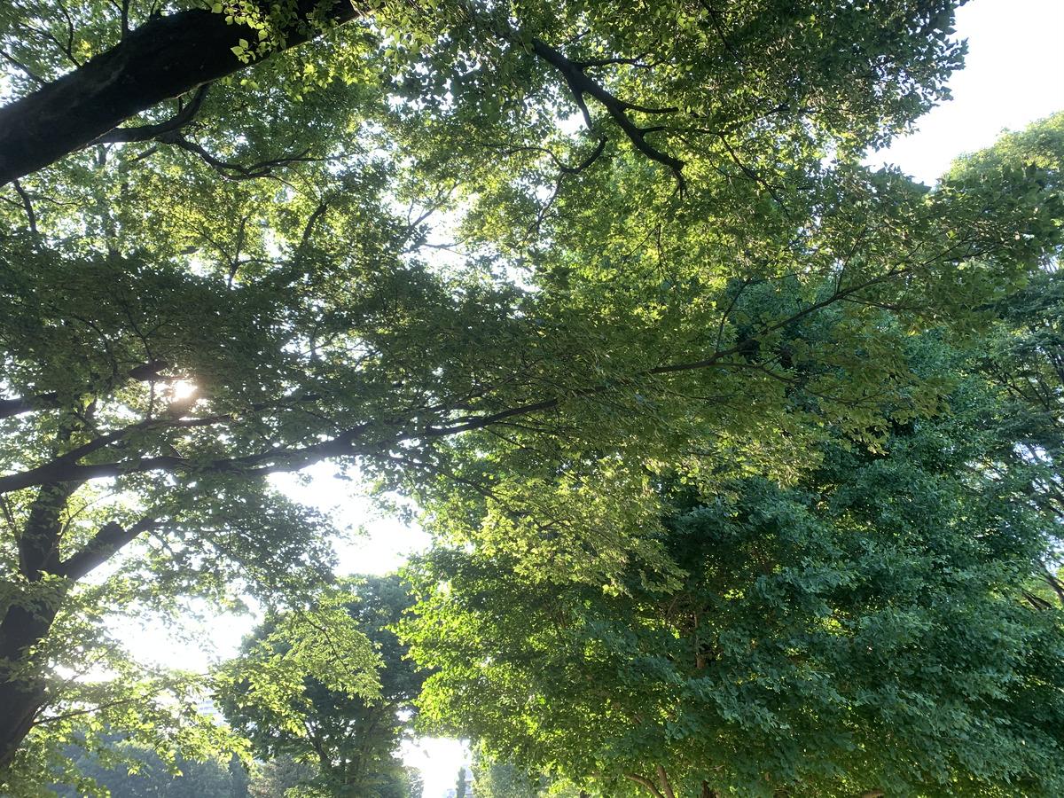 武蔵国分寺公園、円形広場の木漏れ日