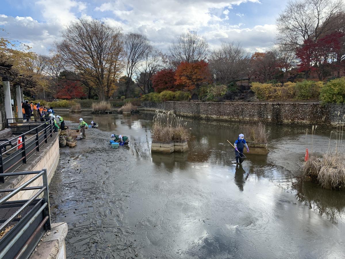 水を抜かれた武蔵の池