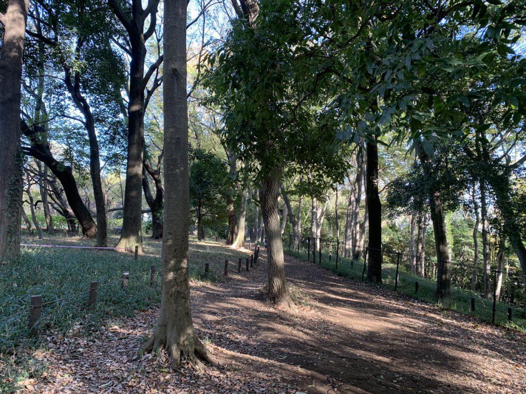武蔵国分寺公園の雑木林。ここから真姿の池にもつながっています