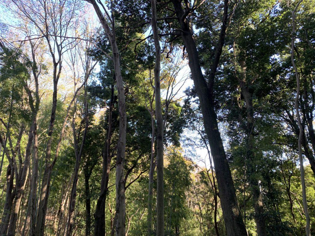武蔵国分寺公園の雑木林を散策したり
