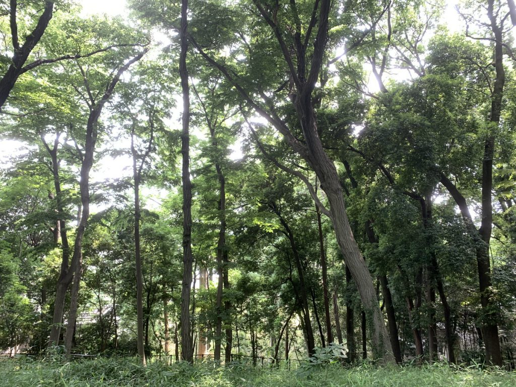 野鳥の森。これでも東京都内ですよ