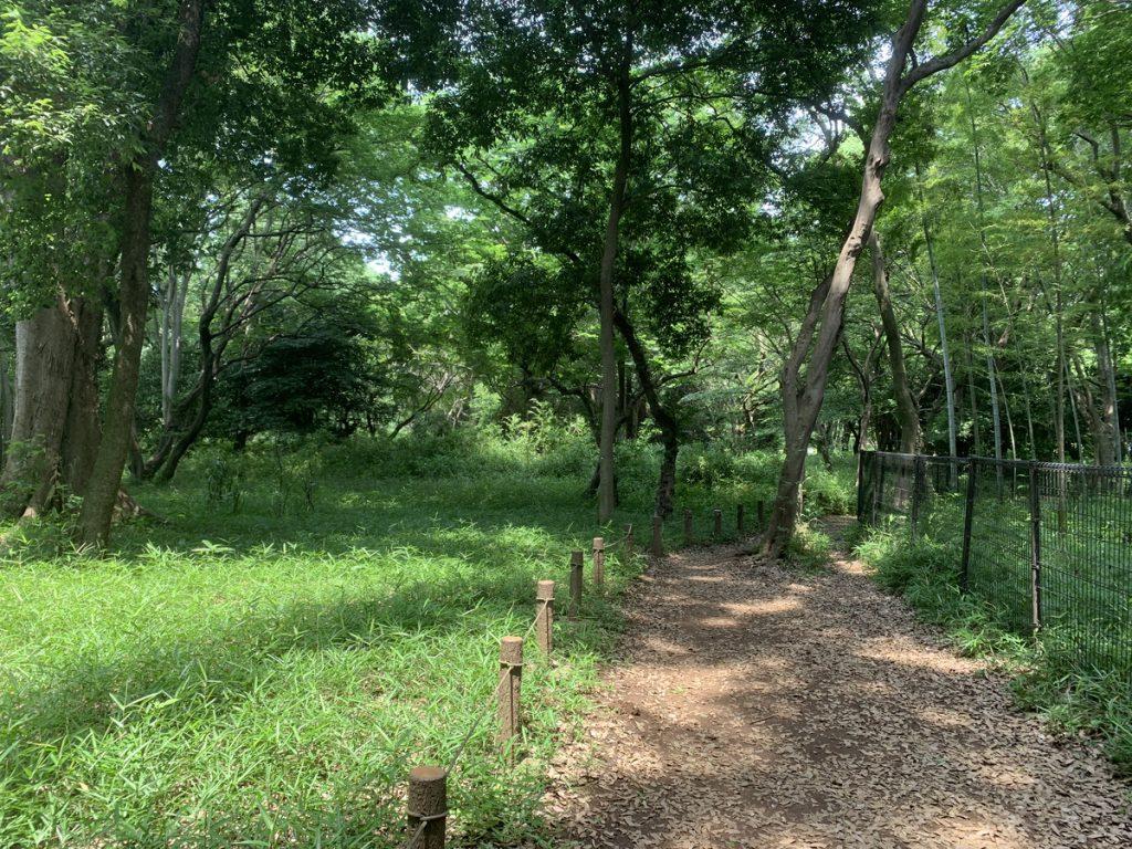 武蔵国分寺公園の野鳥の森の最南端