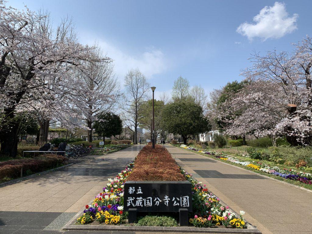 左右の桜が出迎える武蔵国分寺公園の泉・南東口