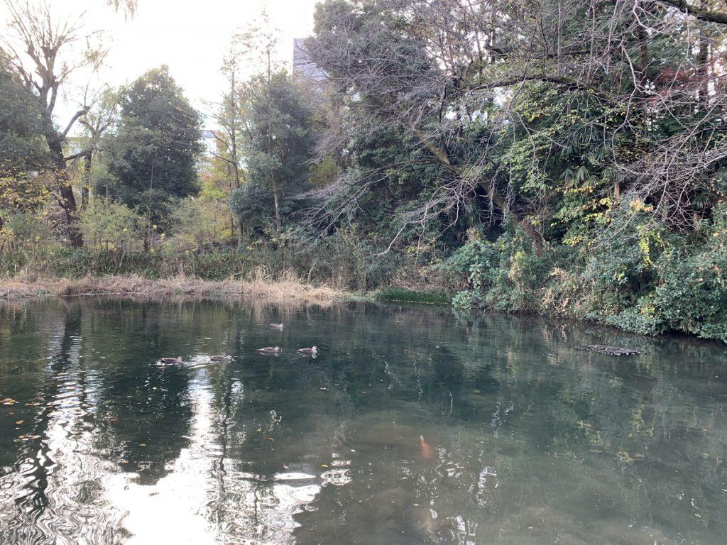 姿見の池でカルガモの群れを見たり