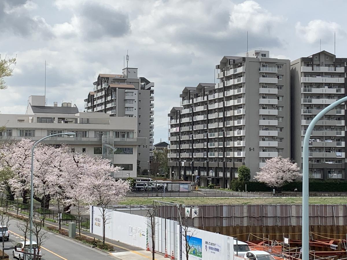 国分寺市の新市役所(新庁舎)の建設が行われる予定の土地の桜