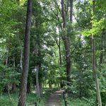 エックス山 (西恋ヶ窪緑地)の雑木林