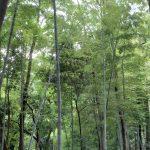 野鳥の森南の雑木林でウグイスの鳴き声を聞く